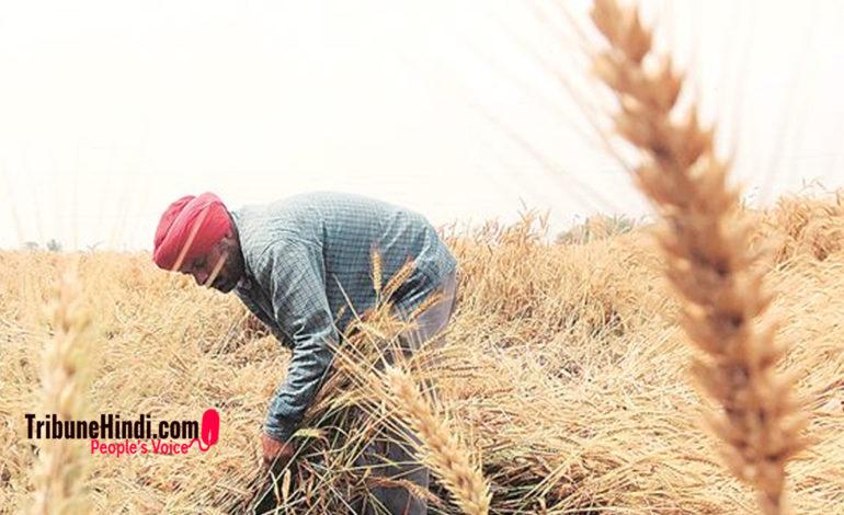 नज़रिया – लगातार उपेक्षा का शिकार होता किसान