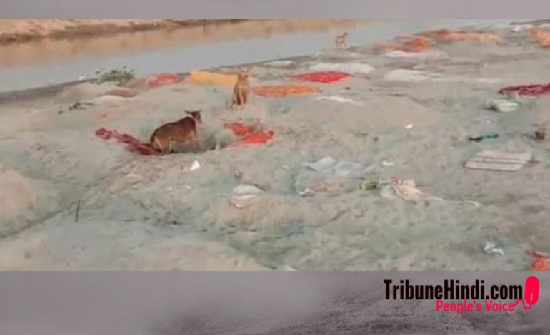 गंगा किनारे बिखरे हैं शव, लाशों को नोच रहे हैं कुत्ते
