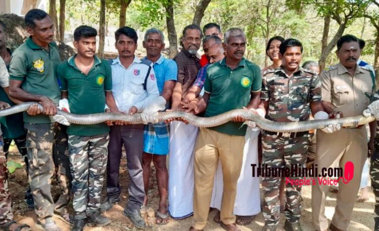 12 फुट लंबे किंग कोबरा के साथ जोहो के सीईओ, तस्वीर वायरल